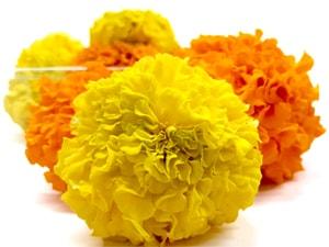 Tagete amarillo y naranja-min