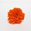 Tagete naranja