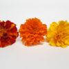 Tagetes de varos colores- Flores comestibles