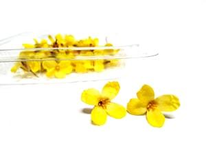 Flor del bimi