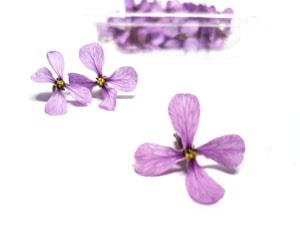 bandeja de moricandia-flor comesitible