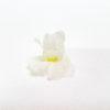 boca de dragón blanco