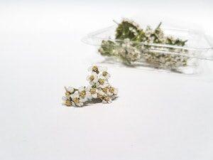 andeja de flor mielenrrama