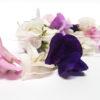 Bandeja flor de guisante