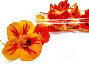 Flor de capuchina