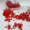 Gitanilla color rojo
