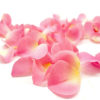 Pétalos de rosa (Rosa)