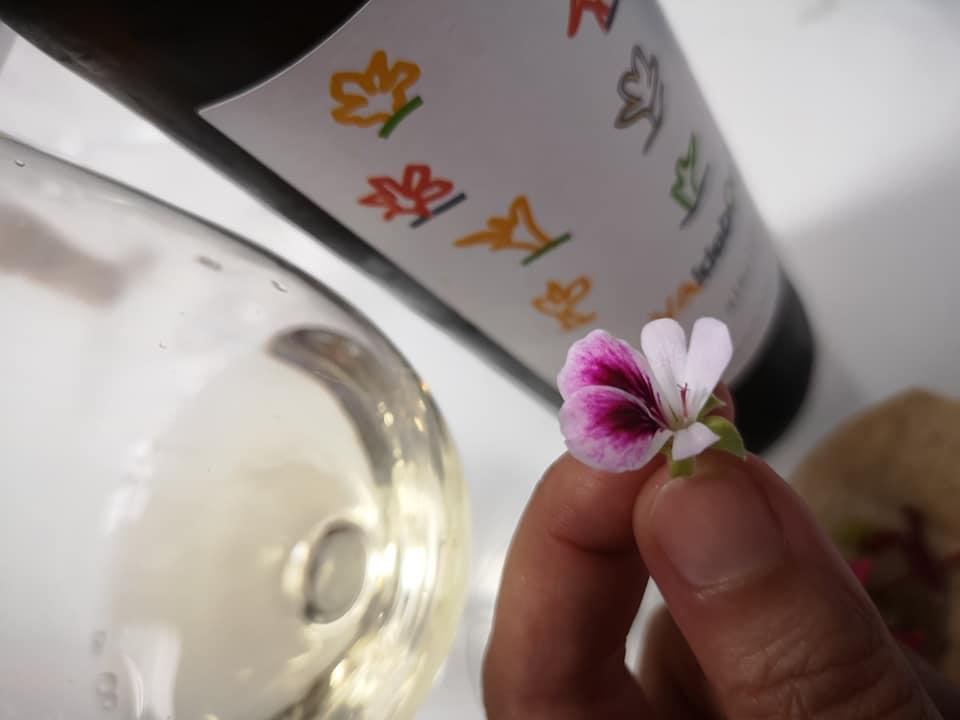 Pelargonium mini con Valdebonita (vino blanco)