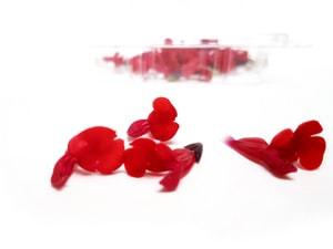 Salvia cassis