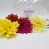 crisantemos variados