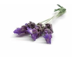flor de lavanda sudafrica