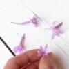 Flor de tulbaghia