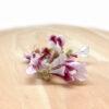 Pelargonium mini liofilizado