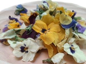 Viola liofilizada (web)