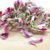 pelargonium mini lio