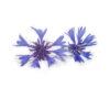 Flor de aciano