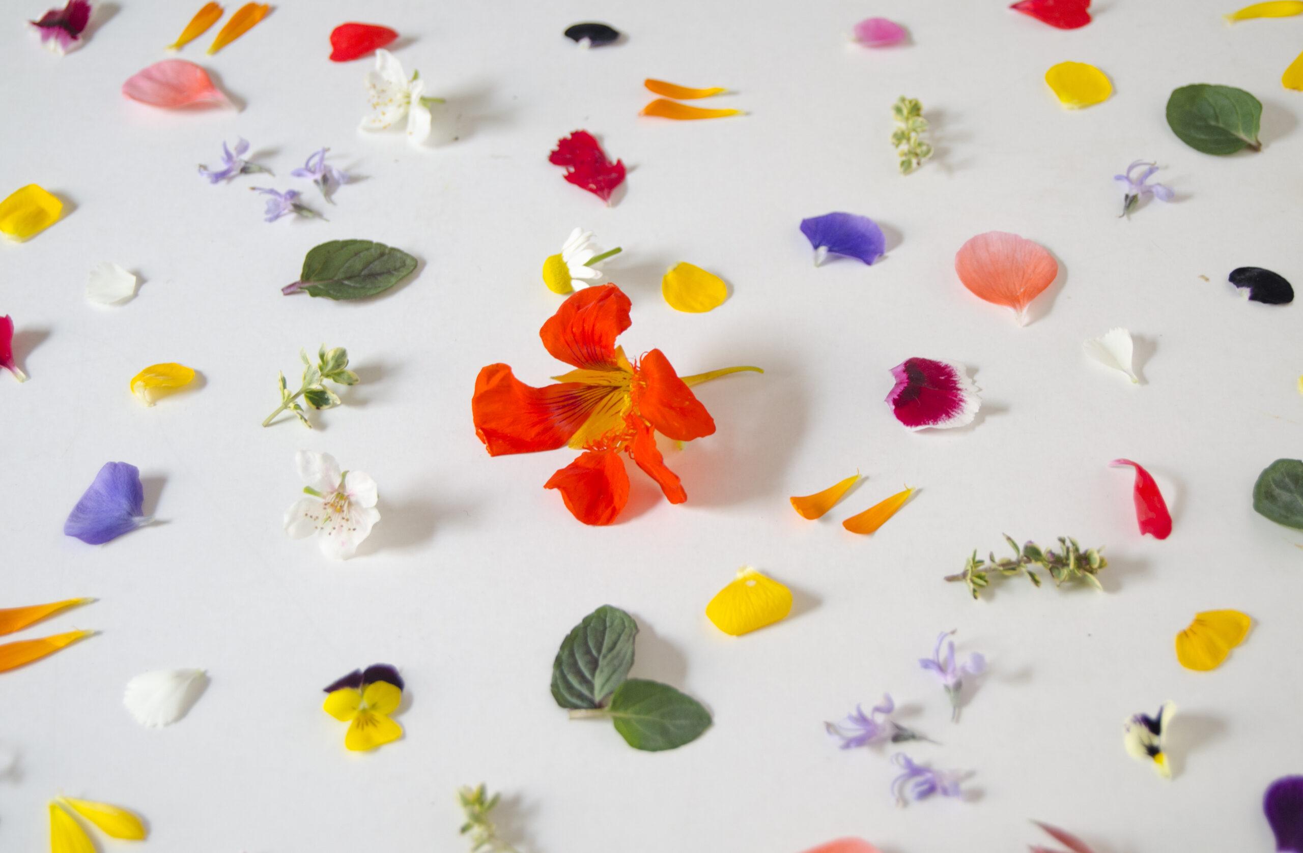 Lista de flores comestibles
